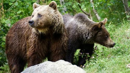 Чем питается медведь. Бурый медведь хозяин леса…