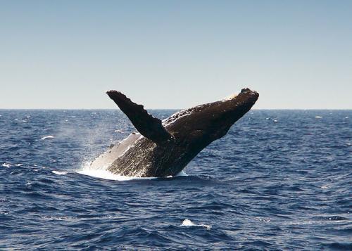 Интересные факты про китов и дельфинов. Удивительные и интересные факты о китах и дельфинах