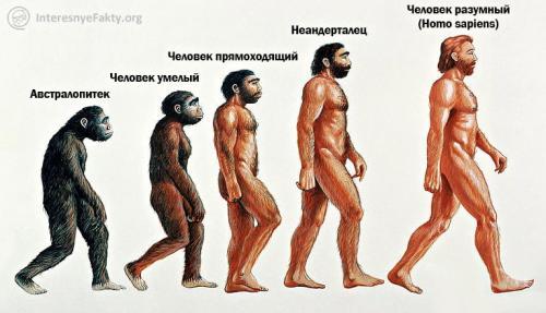 Сообщение о эволюции человека. Основные стадии эволюции человека