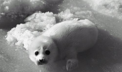 Вымершие виды животных. 7 видов животных, которых мы можем потерять в ближайшее время «благодаря» человечеству
