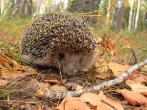 Интересные факты о животных осенью. Жизнь животных осенью.