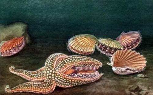 Интересные факты о моллюсках двустворчатых. Двустворчатые
