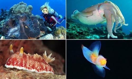 Интересные факты о моллюсках брюхоногих. Интересные факты о моллюсках + Видео
