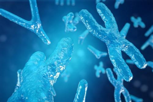Хромосома это кратко. Что такое хромосома?