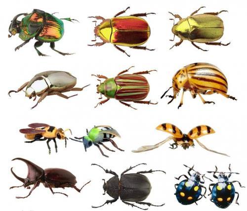 Интересные факты о жуках. Интересные и заниматиельные факты о жуках