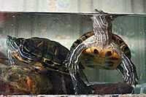 Факты о черепахах для детей. Интересные факты о черепахах