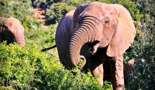 Слоны удивительные животные. Особенности характера и образа жизни