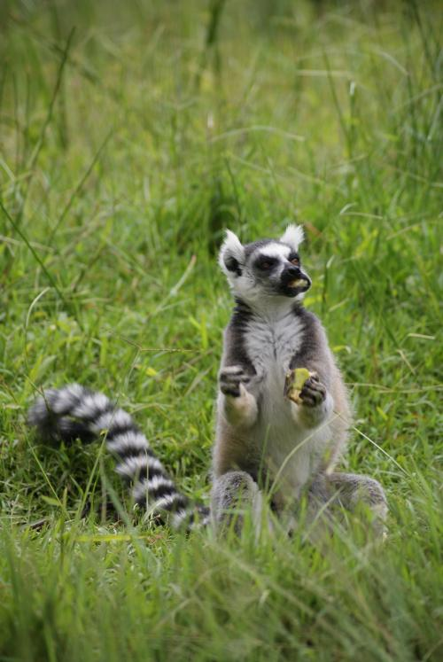 Мадагаскар страна. Мадагаскар — страна, которая не производит ничего, кроме лемуров