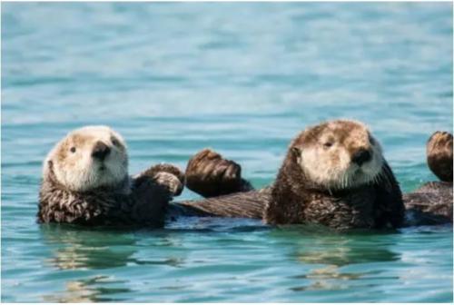 Интересные факты о морских животных. 12 самых невероятных фактов о морских животных, которые заставят вас удивляться!)