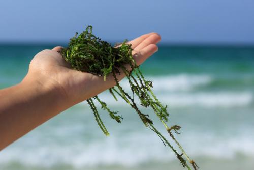 Виды йода. Содержание йода в окружающей среде