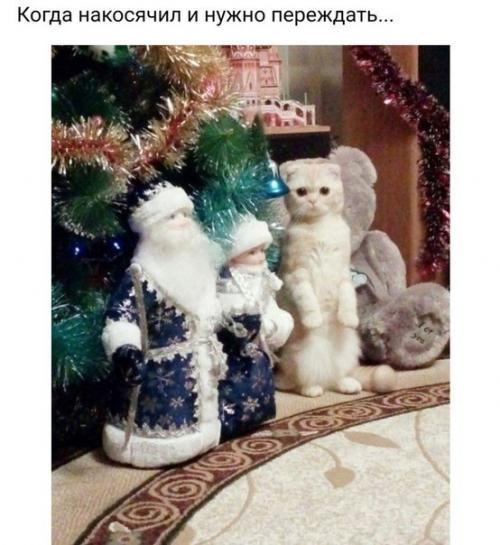 Почему коты ложатся на больное место.