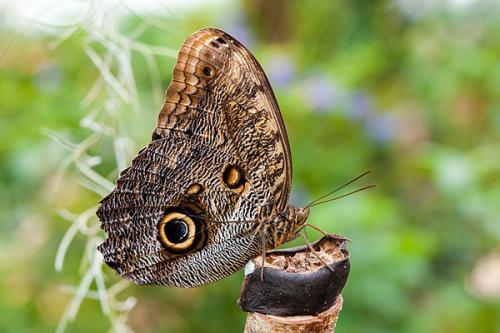 Необычные бабочки мира. Самые необычные и прекрасные в мире бабочки