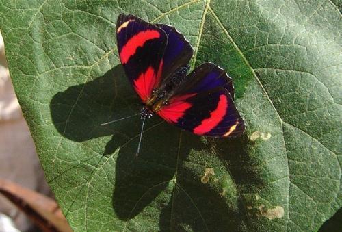 Бабочка 88.