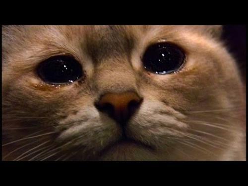 Почему коты уходят умирать из дома. Почему кошка уходит?