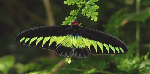 Необычные бабочки мира. Топ-10 удивительных и необычных бабочек