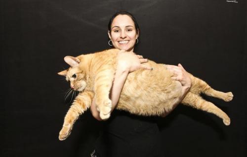 Толстые коты. Коты из Книги рекордов Гиннеса
