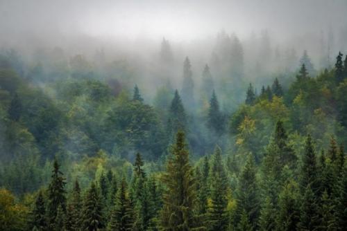 Сообщение о лесе. Описание леса, роль леса в жизни человека