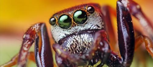 Интересные факты из жизни насекомых. 25 невероятных фактов из жизни насекомых