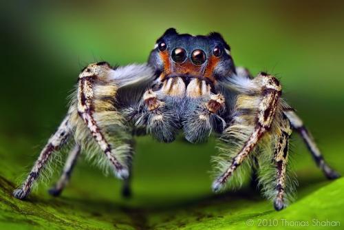 Есть ли мозг у паука. Где находится мозг у паука