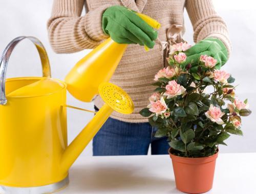 Как ухаживать за цветами. Уход за комнатными растениями в домашних условиях