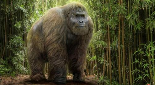 Какой вес может поднять горилла. Мощь и безобидность