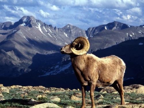 Исчезающие животные Казахстана: список