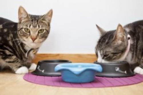 Кошка зарыта. Почему кошка закапывает миску с едой или сркебет лапой рядом с ней, зачем она это делает