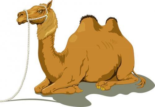 Для чего нужен верблюду горб. Как объяснить ребенку 3-5 лет зачем верблюду горбы
