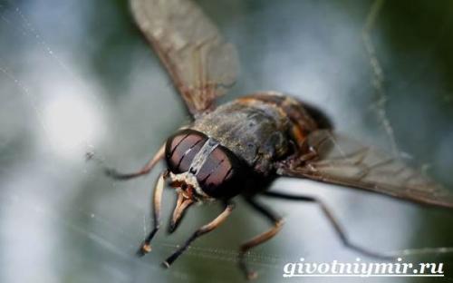 Муха цеце чем опасна. Особенности и среда обитания мухи цеце