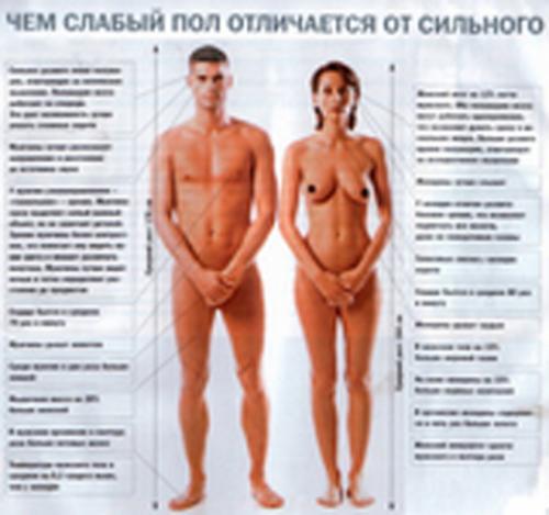 Чем мужчины отличаются от женщин?