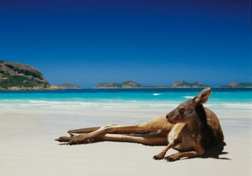 Хищники в Австралии. Почему в Австралии нет крупных хищников