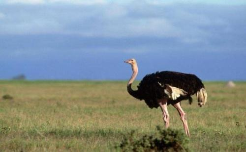 Самый высокий полет птицы. Рекорды в мире птиц