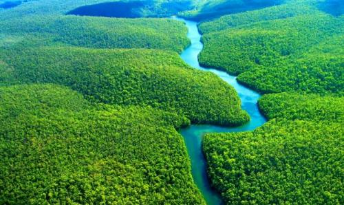 Самый густой лес. Самые большие по площади леса: удивительные фотографии