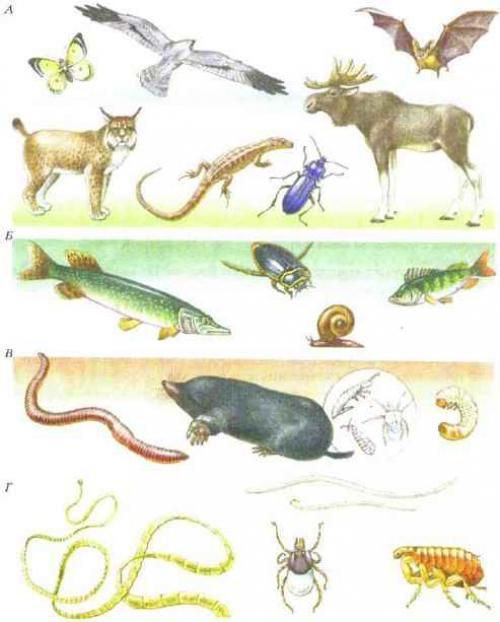 Животное которое может обитать во всех средах обитания. Среды жизни и места обитания