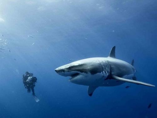 Факты о акулах. 10 удивительных фактов об акулах.