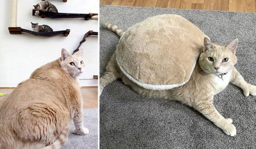 Самый толстый кот. Американская пара взяла из приюта очень толстого кота, чтобы помочь ему похудеть.