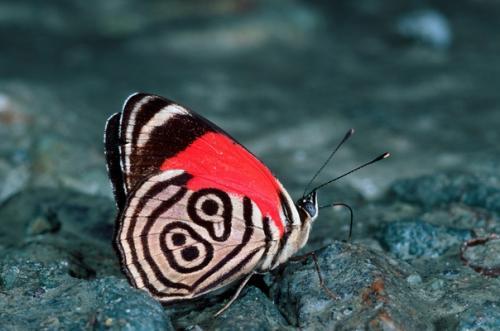 Бабочки необычные. Бабочки 88 и 89.