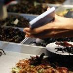 Двадцать пять табу в употреблении пищи со всего мира, которые стоит запомнить.
