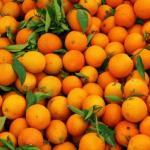 Как отмечают диетологи Сара брюэр и Джульетта келло, цитрусовые являются ключом к молодости и долгой жизни.