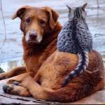 Не обижайте кошек во дворах, и брошенных собак не обижайте.