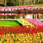 Кёкенхоф - королевский парк цветов в Нидерландах.