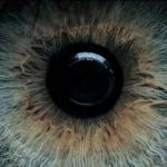 Когда человек смотрит в глаза человеку, которого любит, его зрачки автоматически расширяются.