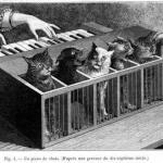 В проектах немецкого ученого и изобретателя атаназиуса кирхера можно найти своеобразный музыкальный инструмент - котопианино.