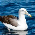 Примерно 75% диких птиц живут менее года.