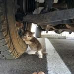 Парень нашел напуганного котенка под грузовиком и не смог оставить его там.