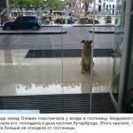 Стюардесса приютила собаку, которая верно ждала её после каждого полёта.