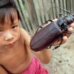 Дровосек - титан - самый крупный среди известных видов жуков.