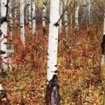 Почему то, что ученые обнаружили в чернобыльском лесу, шокировало весь мир?