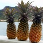 Почему ананасы такие колючие?