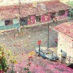Город в Коста-рике заполнили 8 миллионов цветочных лепестков.